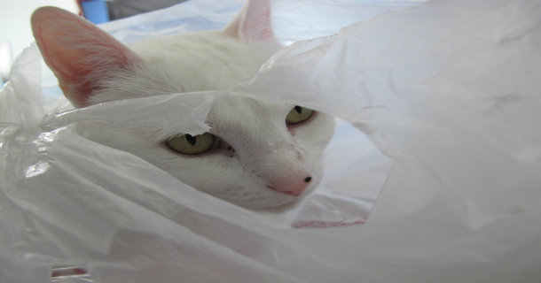 Watch This Cat Get Completely Failed By A Plastic Bag.